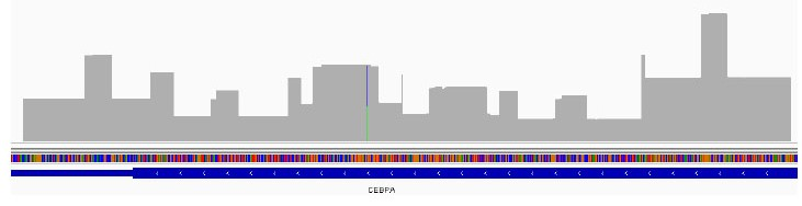 high-coverage-of-cebpa-gene.jpg
